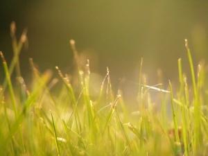 Sunshine on the Grass