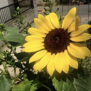 スクリーンショット 2014-07-22 16.44.44